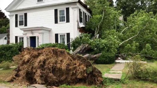 Isaias uproots trees, knocks down power lines in Massachusetts