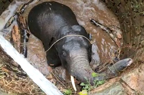 Ingenious elephant rescue uses water to save the day