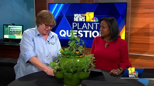 Plant Questions: When should winter mulch be removed