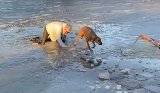 'Brave and selfless': Good Samaritans rescue dog from frozen pond