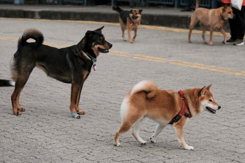 Second dog in Hong Kong tests positive for coronavirus