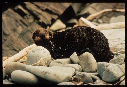 30 years after Exxon Valdez, new perspectives on fossil fuel dangers