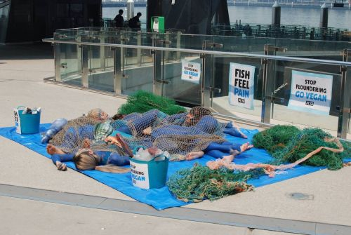 Vegan protesters dressed up as dead fish outside a Sydney Christmas market to try and stop people from eating seafood