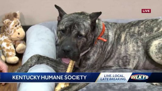WATCH: Ethan the dog and his adoptive family on WLKY