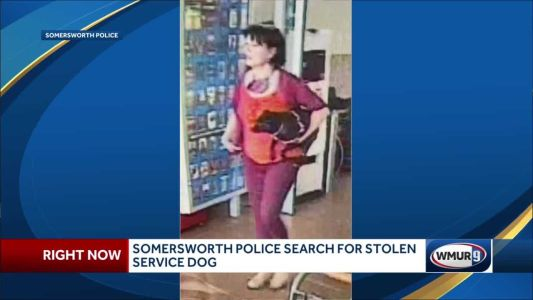 Somersworth police search for stolen service dog