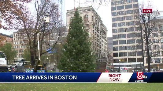 City's official Christmas Tree arrives in Boston