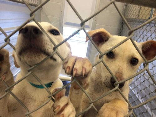 Bill would ban pet stores from selling dogs, cats and rabbits that don't come from shelters or rescues