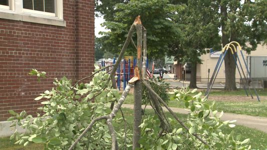 Vandals damage several trees at Rutherford Elementary