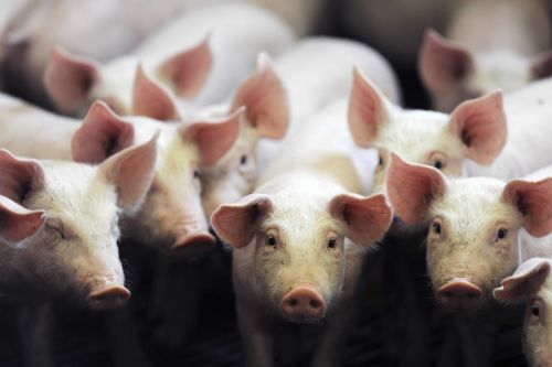 Pork industry changes hailed by companies, criticized by others