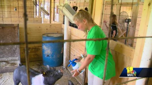 Renovated barn open for students to learn about agriculture in Anne Arundel County