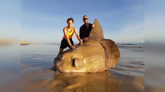 Rare, weird-looking fish weighing more than a car washes up on beach