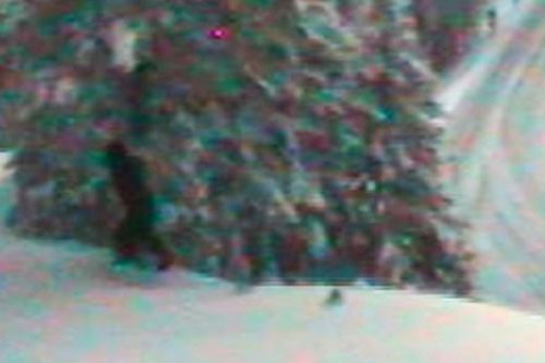 Was Bigfoot just spotted roaming the mountains of Washington state?
