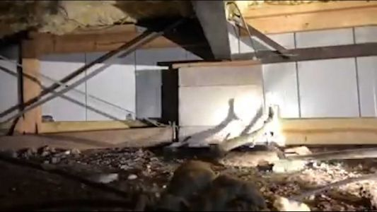 Rattling video: Company removes 45 rattlesnakes living under Texas home