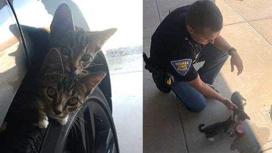 Kittens adopted by Indiana trooper after being abandoned on highway 'doing very well'