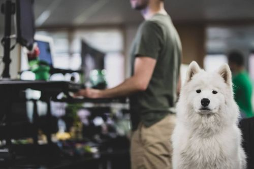 The Friendliest and Most Welcoming Workplaces for Dogs