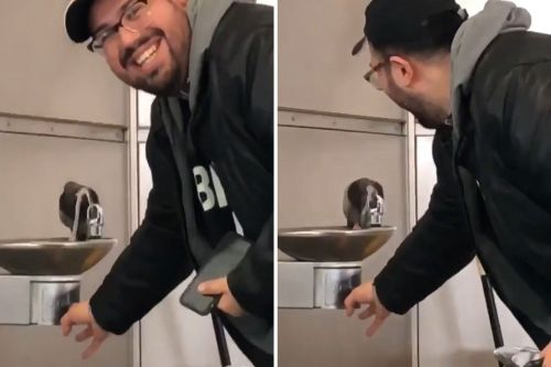 Kind man helps pigeon quench its thirst at water fountain