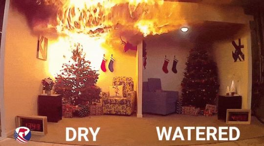 Please remember to water your Christmas tree