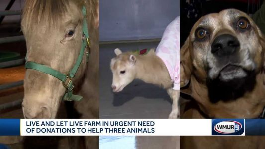 Live and Let Live Farm Rescue in urgent need of donations to help 3 animals