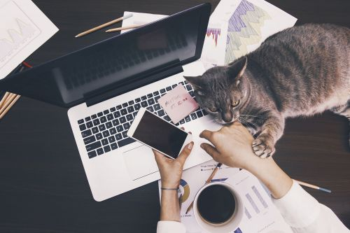 Wall Street would rather you didn't bring your pets to work