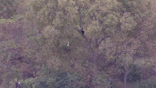 Police pursuit ends in Northland; driver found hiding in tree