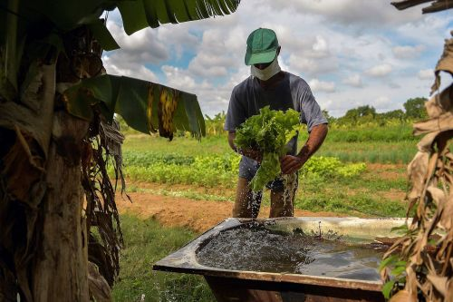 Why Cuba now faces a huge food shortage