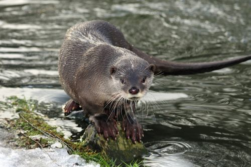 River otters attack, injure family dog in Alaska