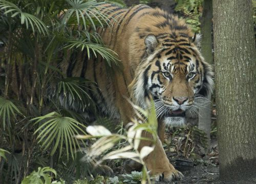 Reports: Person attacked by tiger at Kansas zoo