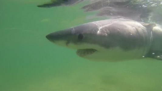 Beach-goers warned after another great white shark sighting on Cape Cod