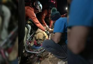 Massive mastiff rescued after mountain hike exhausts him