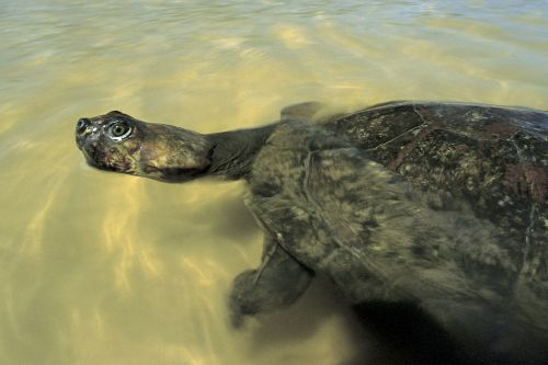 Turtle researcher stripped of award after 'skimpy swimsuit' presentation