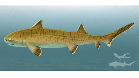 'Giant' Jurassic shark fossil unearthed in Germany was 'most impressive' fish of its time