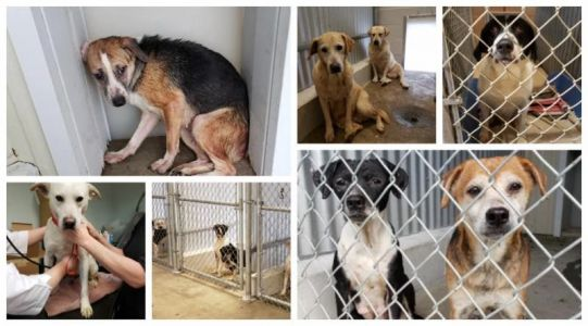 Louisiana shelter seizes more than 150 dogs, seeks public's help