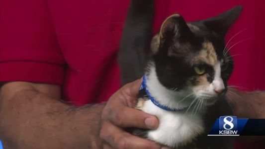 Pet of the Week: Punky