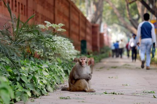 Monkeys are taking over India's government buildings