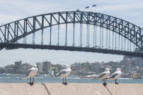 Angry at birds, eatery gives diners water guns to get rid of seagulls