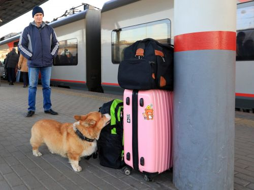 Airlines may soon start banning service animals that aren't dogs