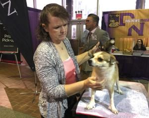 Thousands of dogs begin vying for Westminster show title