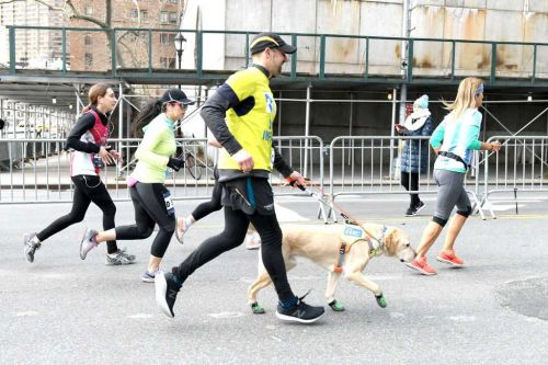 'It's really a team': Blind runner, guide dog trio make history running half marathon