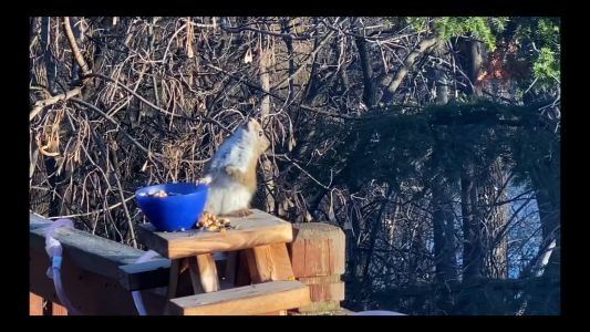 Viral Video: Squirrel Gets Drunk In Twin Cities Backyard