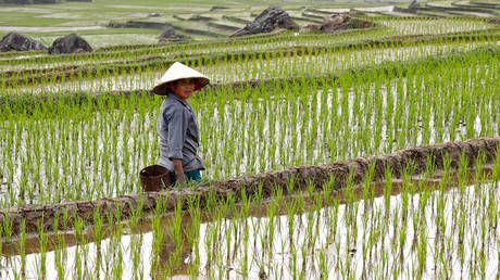 Rice & wheat prices surge amid fears Covid-19 lockdown may threaten global food security