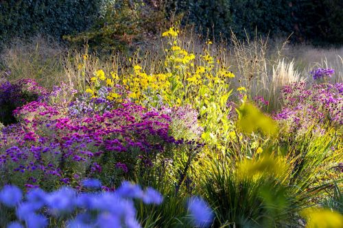 The best flowers to plant in your fall garden