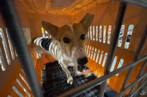 Fur-ever home: Dogs destined for Chinese meat trade land in NYC