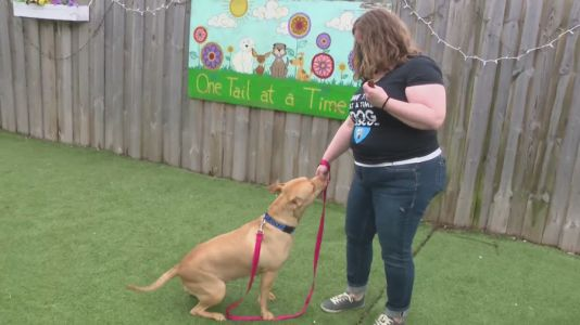 After year of virtual adoptions, Logan Square animal rescue reopens to public
