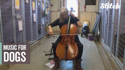 Musician brings unique volunteering approach to animal shelter