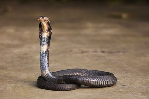 Snakes may be to blame for the deadly coronavirus originating in China