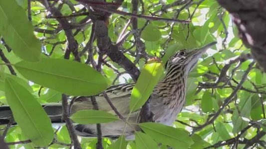 Up close and personal with New Mexico's favorite bird