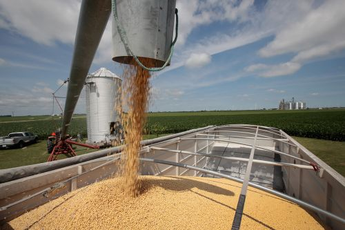 China to lift punitive tariffs on US soybeans, pork