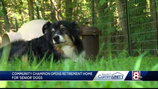 'They just want to be loved'; Woman opens retirement home for older dogs