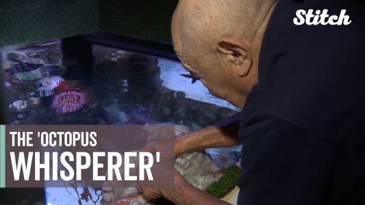 Meet the 84-year-old retired engineer known as the 'Octopus Whisperer'