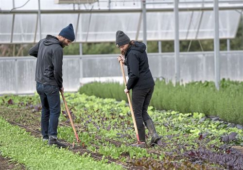 A box of farm-fresh kale, onions and beets every week? With tech, the humble CSA becomes more market-driven